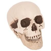 Halloween decoratie doodskop 21 cm