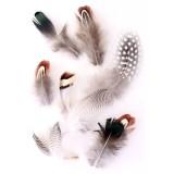 veren fournituren carnaval decoratie pluimen donsjes