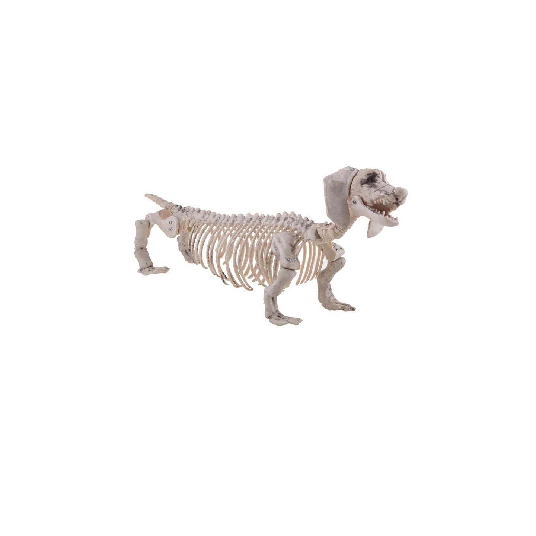 halloween skelet hond tekkel decoratie