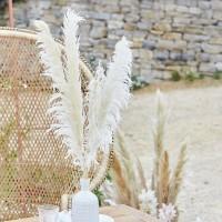 Pampas gras Bleached 90 cm 5st